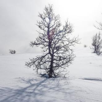 Vintersleppet 2017. Foto Solveig Hjallen-11