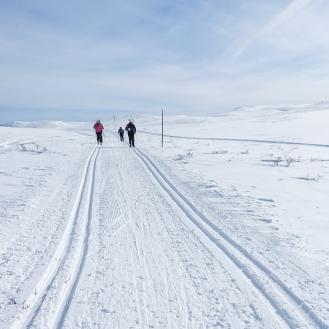 Vintersleppet 2017. Foto Solveig Hjallen-15