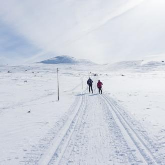 Vintersleppet 2017. Foto Solveig Hjallen-17